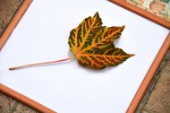 Leaf it to Joomla!